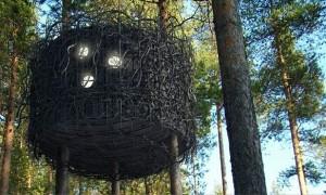 tree hotel 11