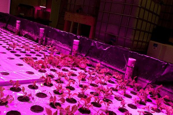 John Edel The Plant